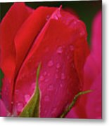 Raindrops On Roses Metal Print by Valeria Donaldson