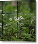 Raindrops On The Garden Fence Metal Print