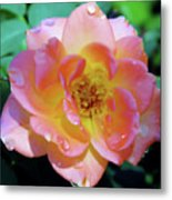 Raindrops On The Pink Rose Metal Print