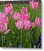 Raindrops On Tulips Metal Print