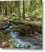 Rainforest At Bridal Veil Falls - British Columbia Metal Print