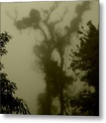 Rainforest IIi  Metal Print