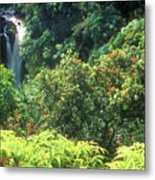 Rainforest Near Hana Metal Print