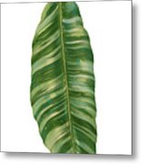 Rainforest Resort - Tropical Banana Leaf  Metal Print