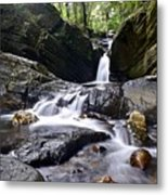 Rainforest Stream Metal Print