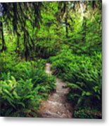 Rainforest Trail Metal Print