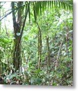 Rainforest Trees Metal Print
