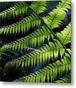 Rainforest Wonder Metal Print