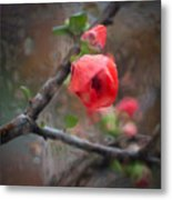 Raining Day Blossom  Metal Print