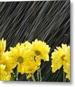 Raining On Yellow Daisies Metal Print