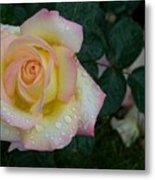 Rainy Day Rose Metal Print