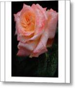 Rainy Rose In Macro Poster Metal Print