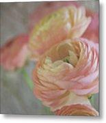 Ranunculus - 6219 Metal Print