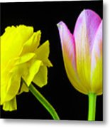 Ranunculus And Tulip Metal Print