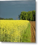 Rapeseed Field With Storm Clouds In Background Metal Print
