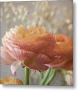 Ranunculus - 6315 Metal Print