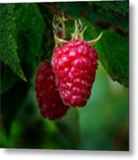 Raspberry 1 Metal Print