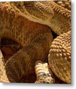 Rattlesnake And Rattle Metal Print