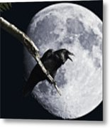 Raven Barking At The Moon Metal Print by Wingsdomain Art and Photography