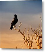 Raven On Sunlit Tree Branches, Grand Canyon Metal Print by Trina Dopp Photography