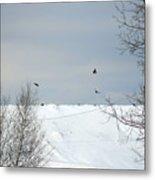 Ravens On The Prowl Metal Print