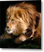 Raw Lion Power Metal Print