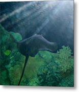 Ray To Rays Metal Print