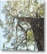 Reaching For The Sky Metal Print by Brandon Tabiolo - Printscapes