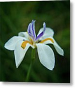 Reaching Iris Metal Print