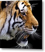Ready For Lunch Metal Print