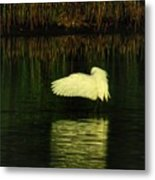 Ready On The Left Metal Print