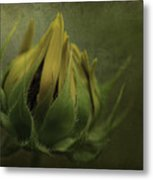 Ready To Flower Metal Print
