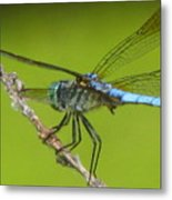 Ready To Fly Metal Print