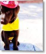 Fire Pup Ready To Roll Metal Print