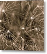 Ready To Seed Metal Print