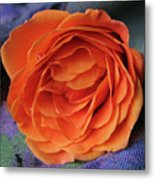 Really Orange Rose Metal Print