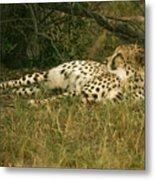 Reclining Cheetah Profile Metal Print