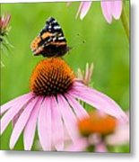 Red Admiral And Cone Flowers Metal Print