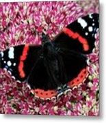 Red Admiral Butterfly Vanesa Atalanta Metal Print