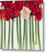 Red Amaryllis With Butterfly Metal Print