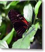 Red And Black Butterfly In The Garden Metal Print