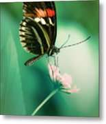 Red And Black Butterfly On White Flower Metal Print