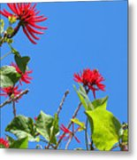 Red And Green San Diego Flowers Metal Print