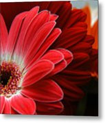 Red And Orange Florals Metal Print