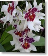 Red And Purple Orchids Metal Print