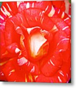 Red And White Rose In Puerto Varas-chile Metal Print