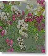 Red And White Roses  Medium Toned Abstract Metal Print