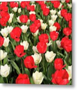 Red And White Metal Print by Tracy Hall