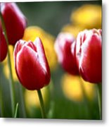 Red And White Tulips Large Canvas Art, Canvas Print, Large Art, Large Wall Decor, Home Decor Metal Print
