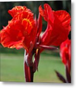 Red And Yellow Asiatic Lilies Metal Print
